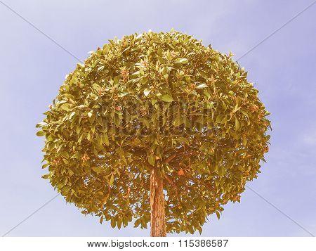 Retro Looking Bay Tree