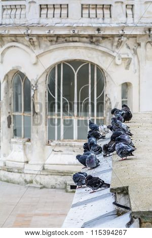 Pigeons On Old City Building. Numerous Black And White Pigeons Are Sitting Near White Old City Build