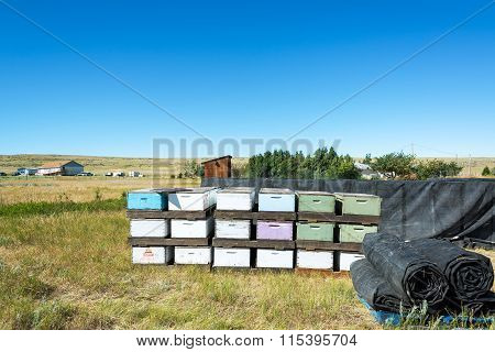 Beehives And Landscape