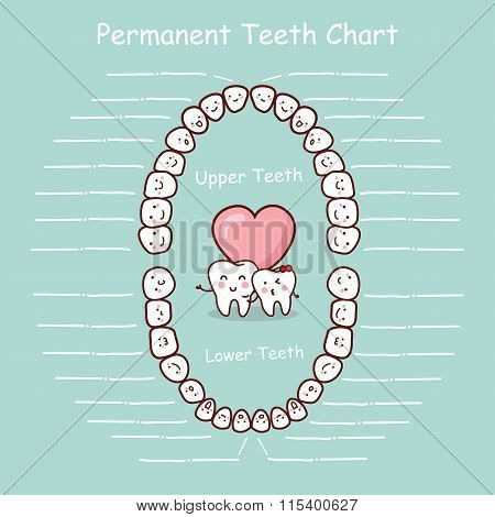 Permanent Tooth Chart Record