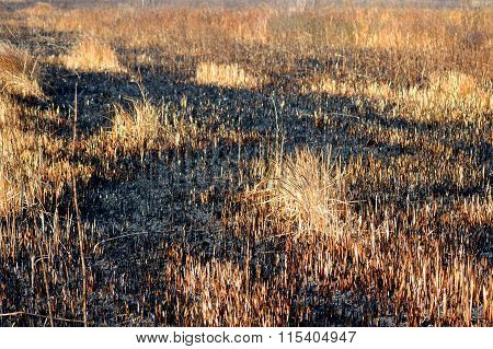 Scorched Dry Grass