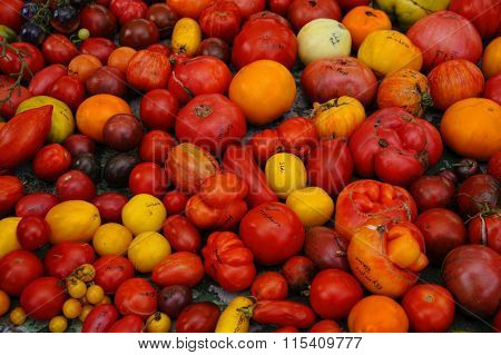 Different rare,old and forgotten tomato cultivars on table