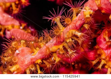 Coral Polyp At Night