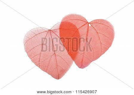 Two Red Heart Shaped Skeleton Leaves On White