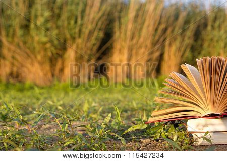Opened hardback book diary, fanned pages on blurred nature lands