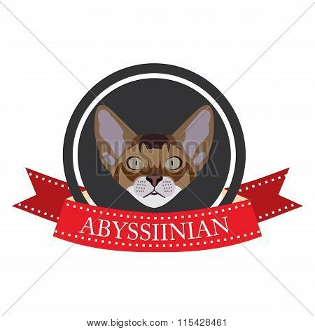 Flat Icon Pedigreed Cat Abyssinian