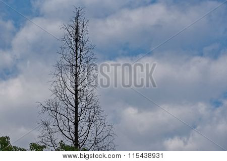 Leafless Tree On A Cloudy Sky Background