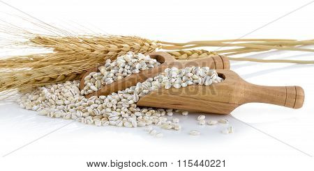 Barley Grains Tn The Scoop Isolated On White Background