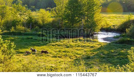 Horses in a pasture meadow near Greenwood, Nova Scotia