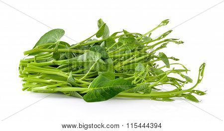 Morning Glory On White Background