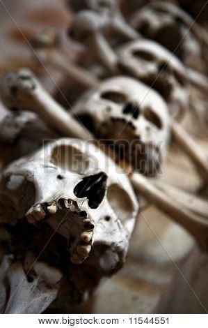 Sculls And Bones Closeup