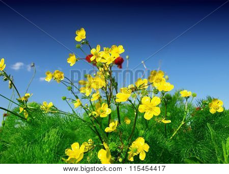 Summer wildflowers and sky