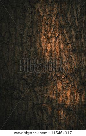Tree bark as background