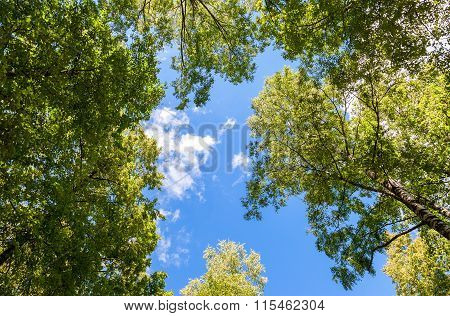 Trees With Green Leaves Against A Blue Sky Background