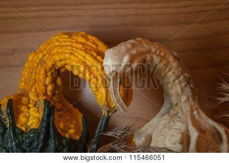 Gourd birds on nest