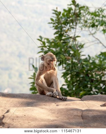 Monkey At Refreshing Atmosphere On The Hilltop