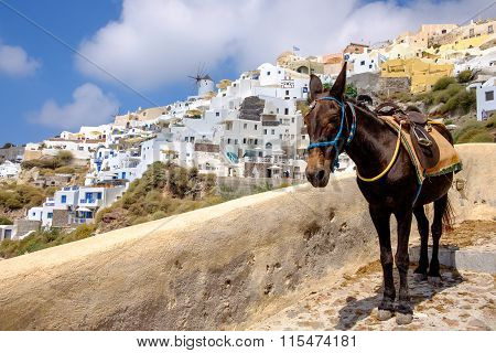 Scenic View Of Beautiful Oia Village And Donkey, Santorini