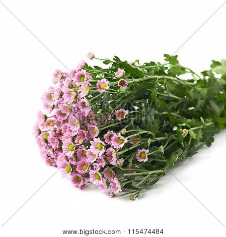 Bouquet of chrysanthemum isolated