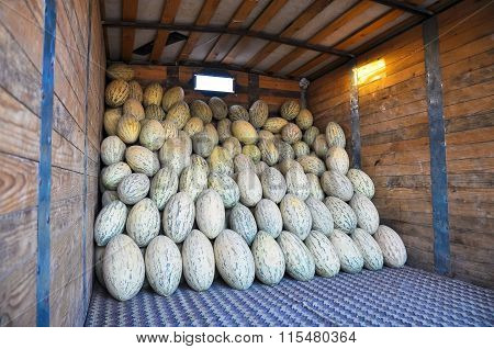 The elongated cultivar Uzbek melons are in the truck