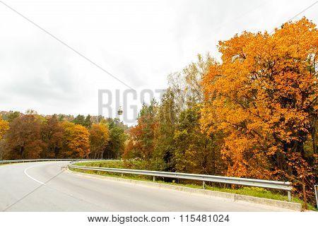 A colourful curving autumn road