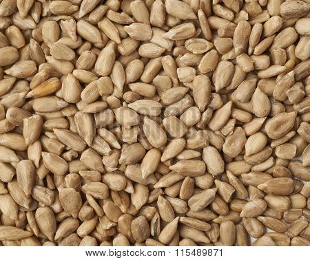 Surface covered with sunflower seeds