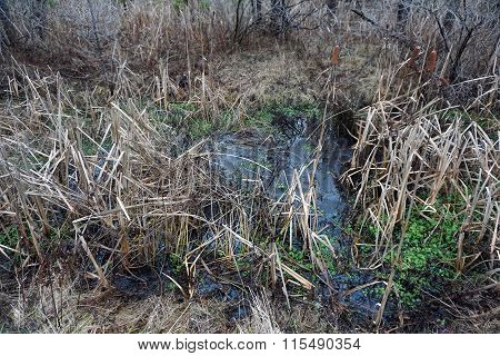 Water in a Swamp