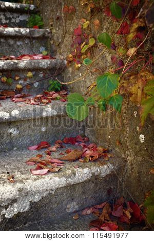 Stone stairway detail with colorful fallen leaves and Ivy