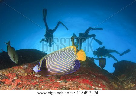 Scuba diving on coral reef with Emperor Angelfish