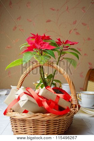 Poinsettia In Basket With Gifts