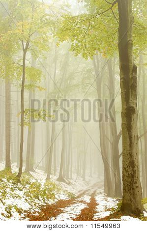 Forest trail in the fog