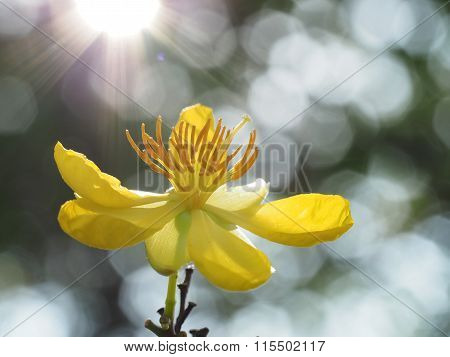 Mickey Mouse Flower Blossom Against Sunshine