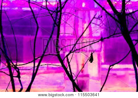 Tree Branch Silhouettes In Front Of Purple Light