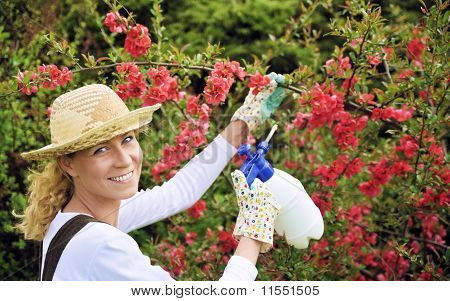 Young woman spraying tree