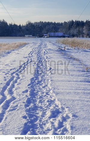 Foot Track In Wintry Landscape