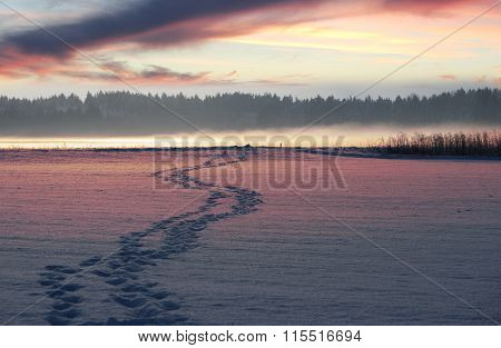 Foot Track Over The Snowy Fields, Sunset Scenery