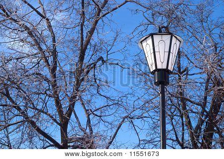Lantern in front of frozen trees on blue sky