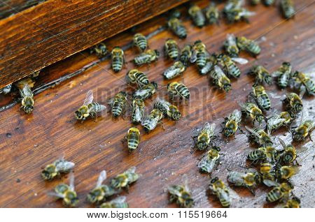 Many Moving Bees On Wooden Board Of Beehive