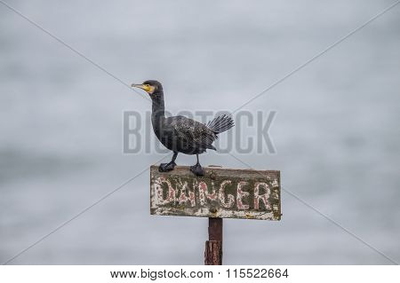 Cormorant perched on a danger sign in the sea