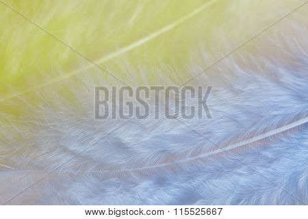 Background Of Close Up Image Of Pastel Yellow And Blue Feathers