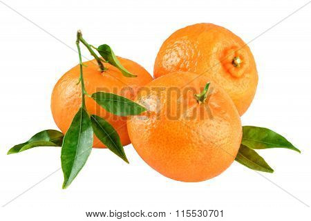 Three Tangerines Green Leafs Isolated on White