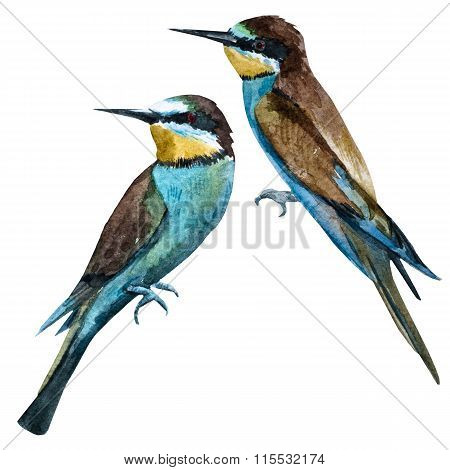 Watercolor raster european bee-eater bird