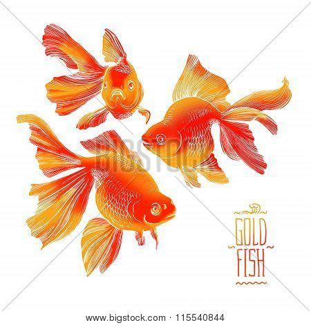 Goldfish illustration artwork  line underwater zen meditation