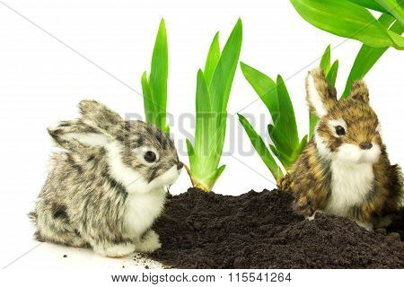 Cute Rabbits On The Soil With Green Plants