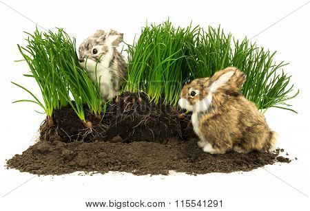 Cute Rabbits, Pets On The Soil With Grass