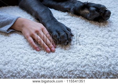 Puppy Paws And Child Hand, Closeup Shot