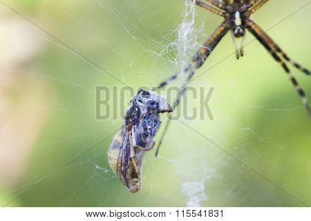 spider the garden spider and its victim