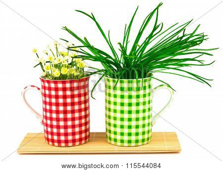 Green and red cups with spring flowers and plants on the mat