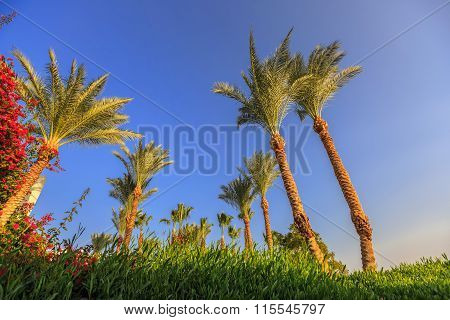 Palm trees on background of blue sky.