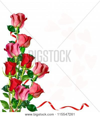 Flowers Rose Isolated On White Background.