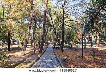 Large Town Park Of Tivat, Montenegro